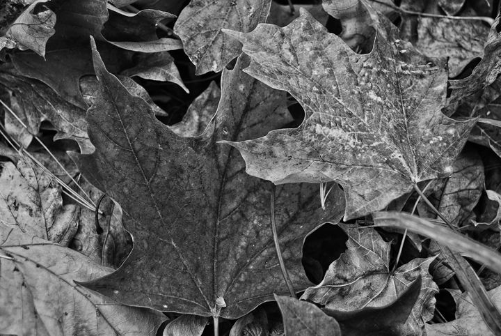 Leaves A Plenty - Mistyck Moon's Turmoil Of The Mind