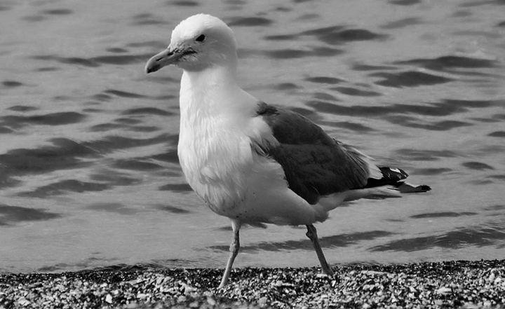 Lake Seagull - Mistyck Moon's Turmoil Of The Mind