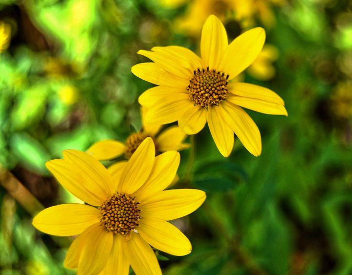 Yellow Beauties - Mistyck Moon's Turmoil Of The Mind