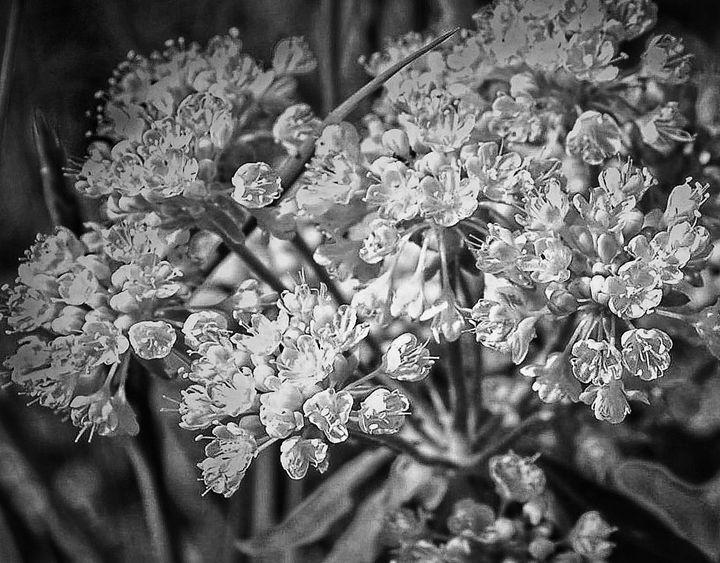 Blossoms - Mistyck Moon's Turmoil Of The Mind