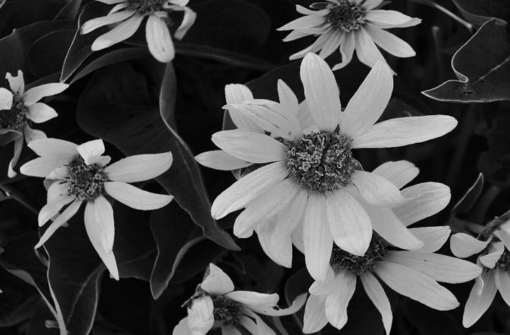 Flowery Bush - Mistyck Moon's Turmoil Of The Mind