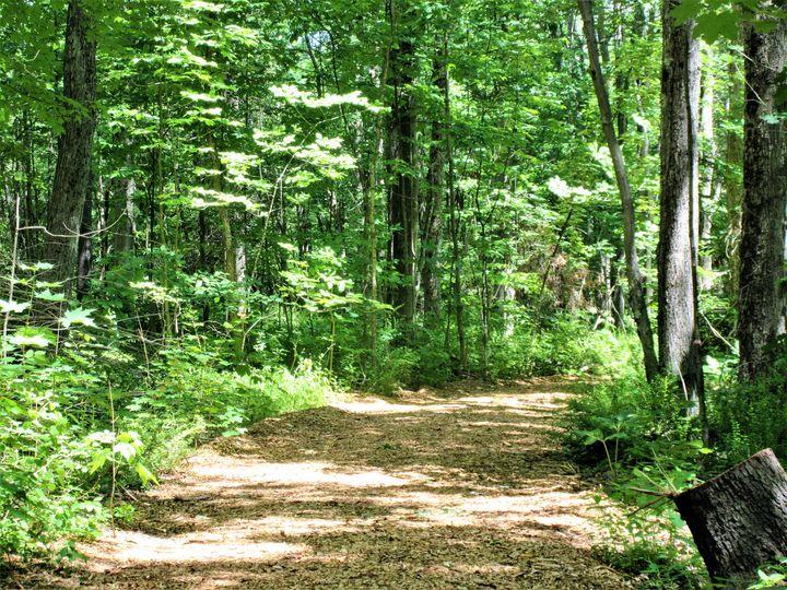 Through The Woods - Mistyck Moon's Turmoil Of The Mind
