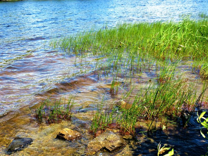Reeds In The lake - Mistyck Moon's Turmoil Of The Mind