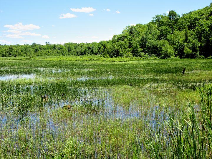Wetlands - Mistyck Moon's Turmoil Of The Mind