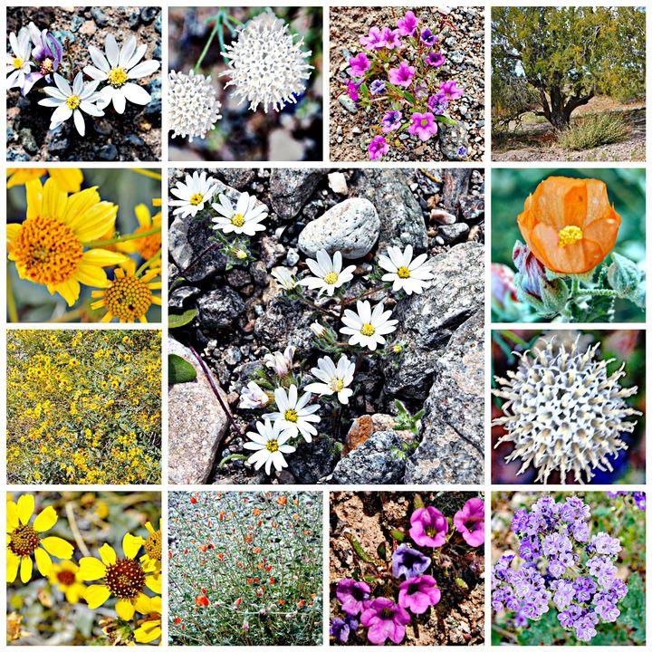 Desert Blooms - Mistyck Moon's Turmoil Of The Mind