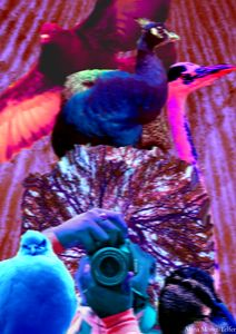 MasterPeice 4:  The Birds Dimension