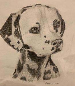 Dalmatian Dog - Monvis