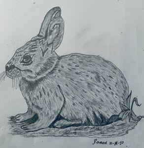 Bunny - Monvis