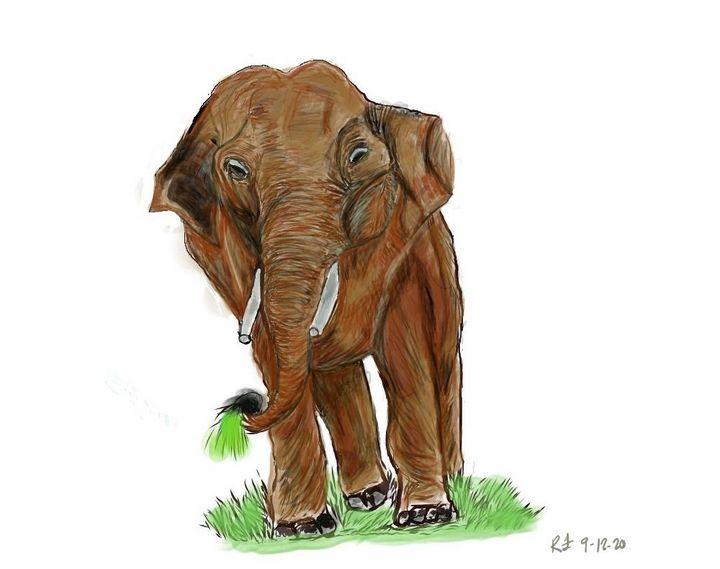 Elephant - Monvis