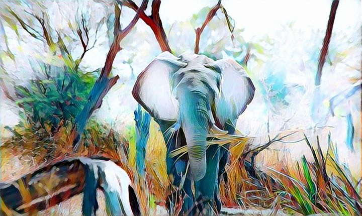 Elephant Wildlife Portrait - Rogue Art