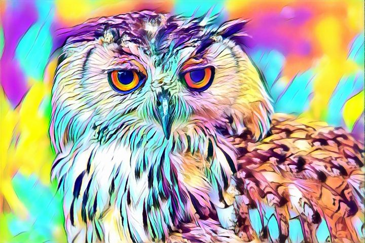 Owl Pop Art Wildlife - Rogue Art