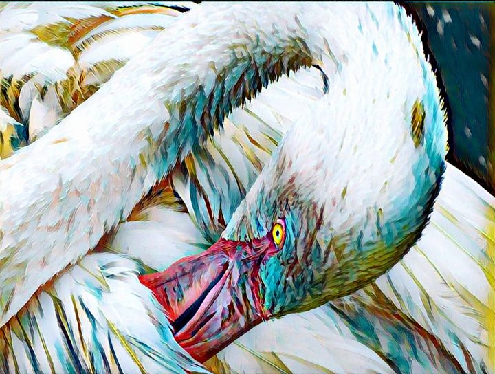 Flamingo - Rogue Art Prints - Rogue Art