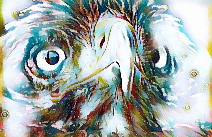 The Face of An Eagle - Rogue Art