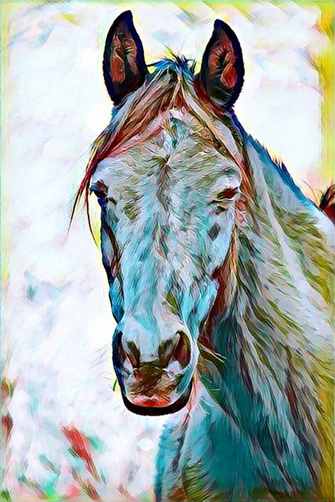Horse Wildlife Portrait - Rogue Art