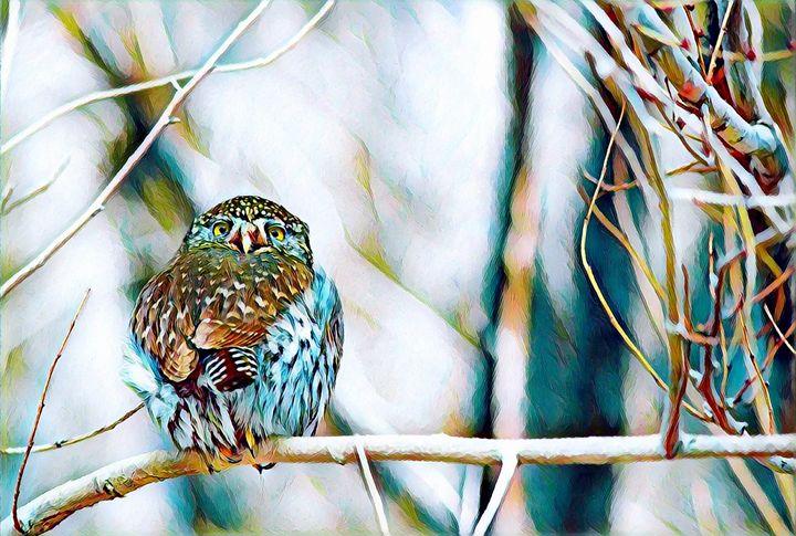 Owl on Branch - Rogue Art
