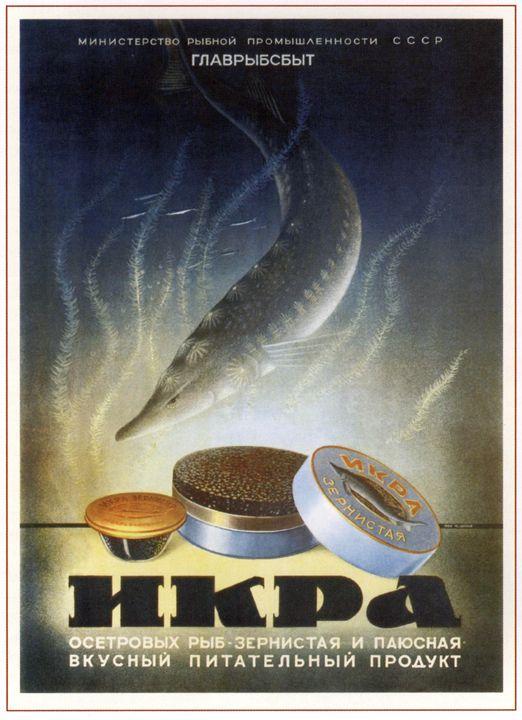 The sturgeon species' Caviar - Soviet Art
