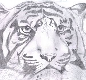 Look of the Tiger