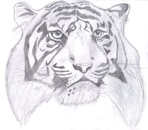 Face pf the Tiger