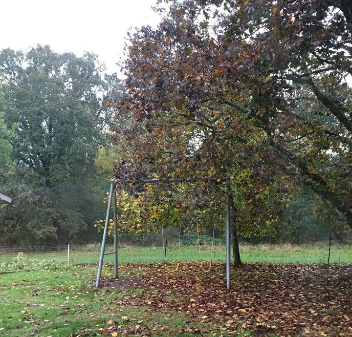 Fall Swings - Little Things