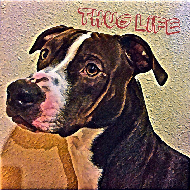 Thug Zeus - Little Things