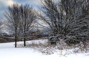 Snowfall - Inge