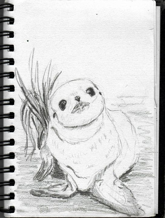 Seal cub - Alexander