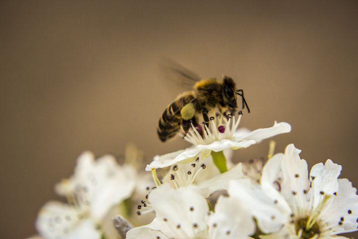 Bee Work - Teigan Blackshaw Photographer