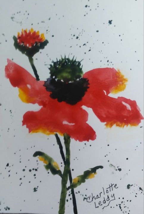 Red Poppy - Charlotte Leddy Watercolor - Prints and Cards Only