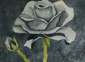 Black Rose - Charlotte Leddy Watercolor - Prints