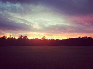 NC Field Sunset