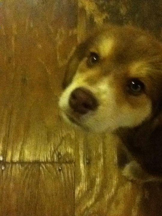 Puppy Looks - Wondering Soul