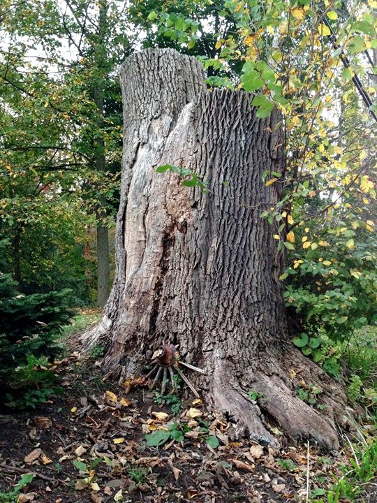 Wise Tree - Art Lifestyle