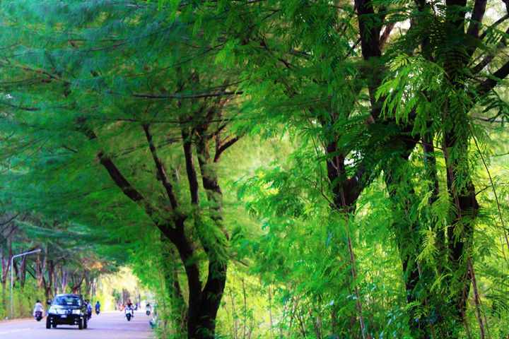 Green streets of Hulhumale', MV - PixelClear