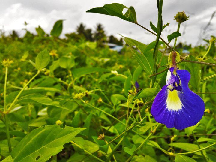 Blue Bell flower - PixelClear