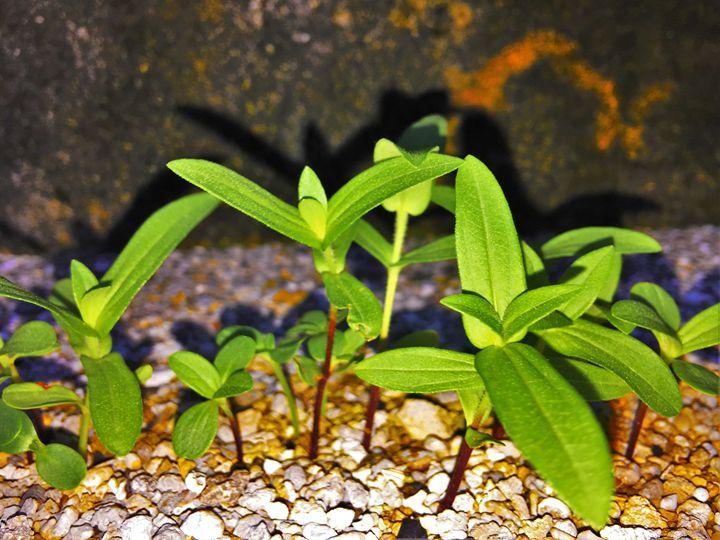 Tiny Green Plants - PixelClear