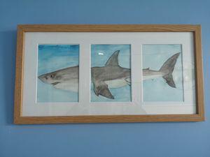 Shark body trio