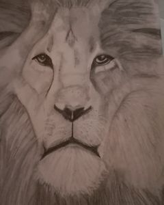 Lion. King of the Jungle
