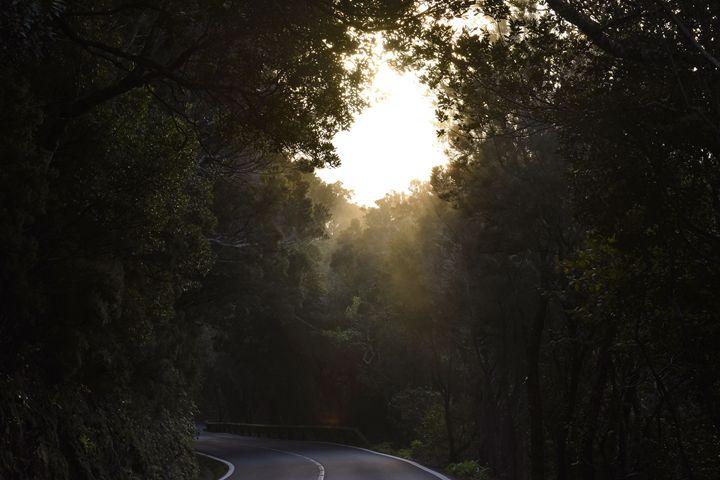 Dark Forest - Marek Stepan Photographer