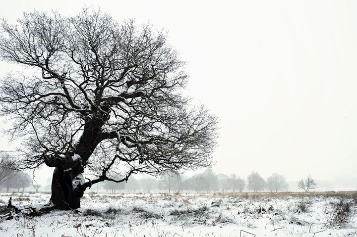 Oak In Winter - Marek Stepan Photographer