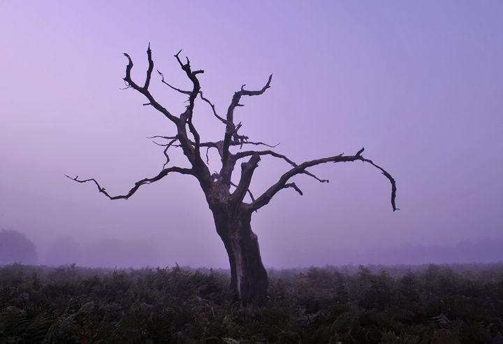 Dry Tree In Fog - Marek Stepan Photographer