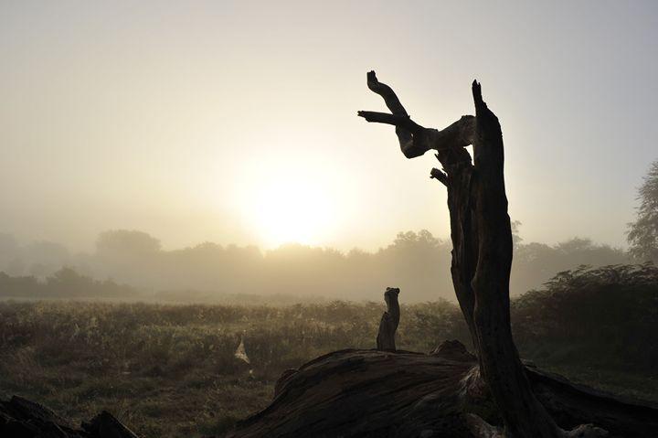 Natural Sculpture In Mist - Marek Stepan Photographer