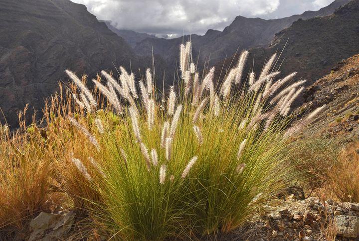Fountain Grass - Marek Stepan Photographer