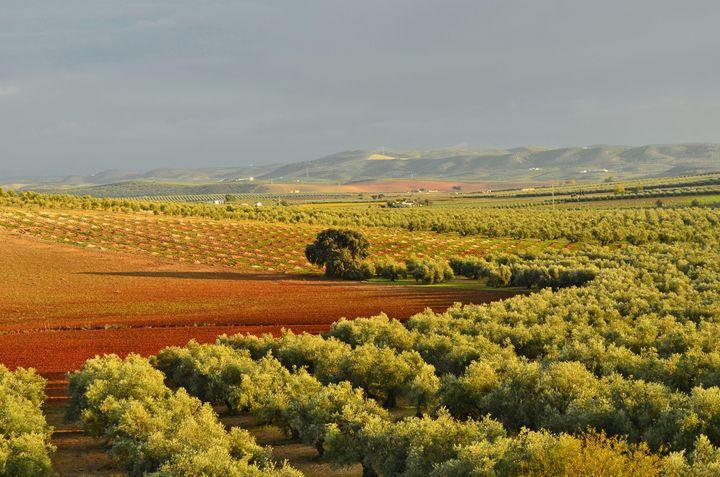 Olive Orchards Seville Spain - Marek Stepan Photographer