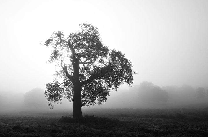 Oak In Fog - Marek Stepan Photographer