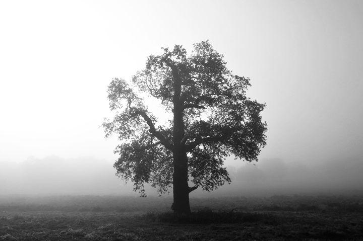 Tree In Fog - Marek Stepan Photographer