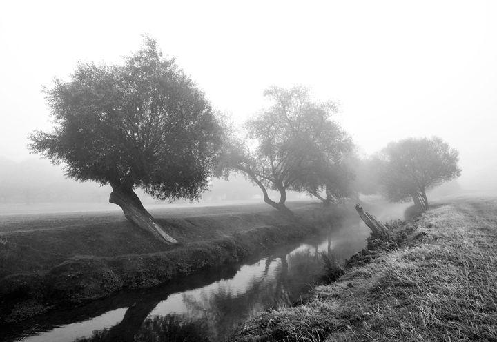 Willows In Fog - Marek Stepan Photographer