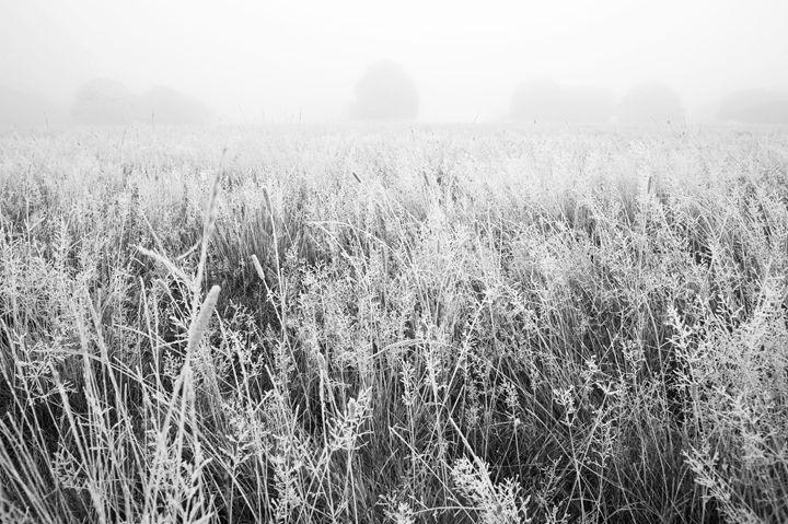 Frosty Morning - Marek Stepan Photographer
