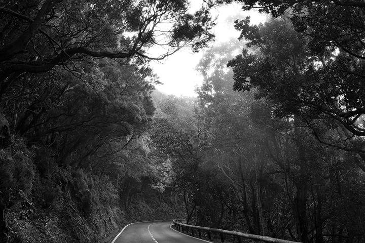 Misty Forest - Marek Stepan Photographer