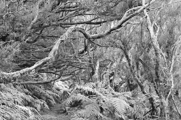 Ancient Laurel Forest - Marek Stepan Photographer