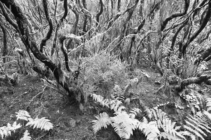 Ancient Woodland - Marek Stepan Photographer